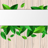 Natural wooden texture, green leaves and white background with p Royalty Free Stock Image