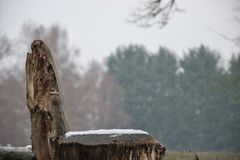 Natural wooden tree trunk seat in snow with trees in background royalty free stock photo