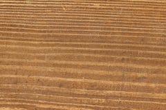 Natural woodgrain texture Royalty Free Stock Photo