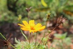 Natural yellow flowers stock photos