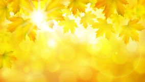 Natural yellow orange horizontal rectangular background with maple leaves, tree branches and sun rays. Vector autumn background royalty free illustration