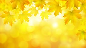 Natural yellow orange horizontal rectangular background with maple leaves and tree branches. Vector autumn background stock illustration