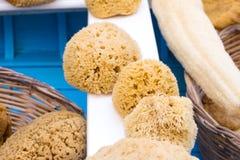 Natural yellow sponges Stock Photos
