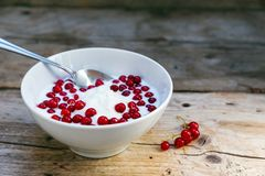 Natural yoghurt cream with fresh red currants in a white bowl, h Stock Photography