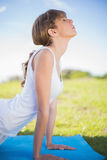 Natural young woman stretching on her mat. Outside in a sunny meadow Royalty Free Stock Photography