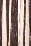 Natural Zebrano veneer Royalty Free Stock Photography