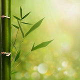 Natural zen backgrounds Royalty Free Stock Photo