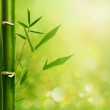 Natural zen backgrounds Royalty Free Stock Image
