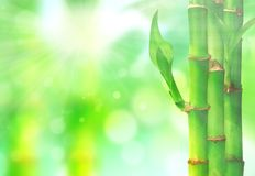 Natural zen backgrounds with bamboo leaves Stock Photo