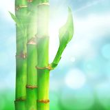 Natural zen backgrounds with bamboo leaves Royalty Free Stock Photography