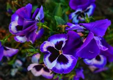 Naturalbeauty newyorkcity της Τουρκίας antalya λουλουδιών Στοκ Φωτογραφία