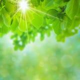 Naturale astratto Fotografie Stock