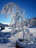 Naturale di ghiaccio Fotografia Stock