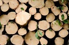 Naturale di legno fresco ha segato i ceppi il primo piano, struttura per fondo, la vista superiore, foto posta piana immagine stock