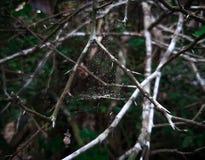 Naturale drzewo w vilage zdjęcia stock