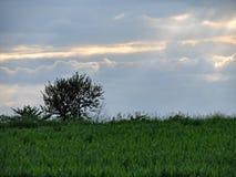 Naturaleza, árbol, hierba, cielo, rayos del sol fotografía de archivo