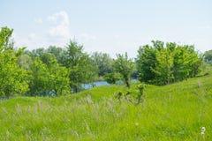 Naturaleza: árboles, cielo de la hierba y río Fotos de archivo