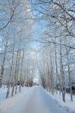 Naturaleza, árboles y callejón del invierno en la ciudad Foto de archivo libre de regalías