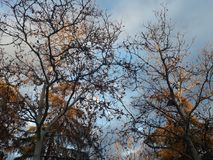 Naturaleza Royaltyfria Bilder