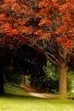 Naturaleza (25) foto de archivo libre de regalías