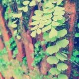 Naturaleza Fotografía de archivo