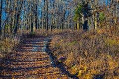 Naturaleza Foto de archivo libre de regalías