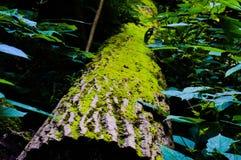 Naturaleza Fotos de archivo libres de regalías