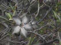 Naturaleza Fotografía de archivo libre de regalías