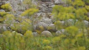 Naturaleza Imagen de archivo libre de regalías
