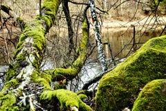 Naturaleza Foto de archivo