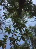 Naturaleza Fotos de archivo