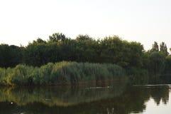 Naturaleza Agua Agua Costa de los árboles del depósito Un pedazo de naturaleza Naturaleza con una charca tarifas foto de archivo