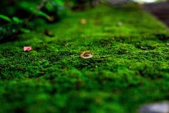 Naturaleza alrededor de nosotros foto de archivo libre de regalías