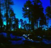 Naturaleza Arizona fotos de archivo libres de regalías