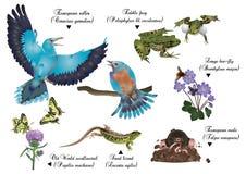 Naturaleza asombrosa fijada - animales europeos Fotos de archivo libres de regalías