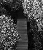 Naturaleza ausente en el salvaje Foto de archivo libre de regalías