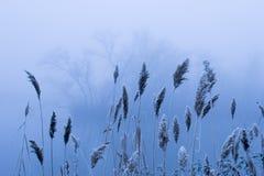 Naturaleza azul Imagenes de archivo