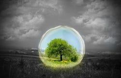 Naturaleza bajo el vidrio Imagen de archivo libre de regalías