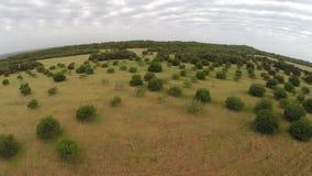 Naturaleza balear de los árboles y de los campos - vuelo aéreo, Mallorca metrajes