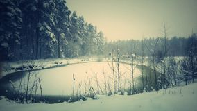 Naturaleza blanca Imagenes de archivo