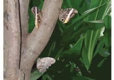 Naturaleza buttefly Fotos de archivo