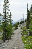 Naturaleza canadiense - camino de Kananaskis Imágenes de archivo libres de regalías