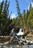 Naturaleza canadiense - cascada de Kananaskis Fotos de archivo libres de regalías