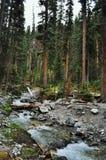 Naturaleza canadiense - Kananaskis Imágenes de archivo libres de regalías