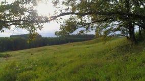 Naturaleza central de Rusia Imagen de archivo libre de regalías