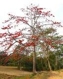 Naturaleza colorida Fotos de archivo