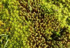 Naturaleza colorida Fotografía de archivo libre de regalías