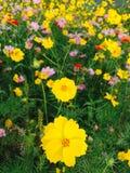 Naturaleza colorida de la flor Foto de archivo libre de regalías