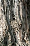 Naturaleza como diseñador gráfico la corteza de un árbol viejo Imagen de archivo libre de regalías