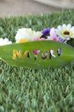 Naturaleza con el fondo de las flores Imagen de archivo libre de regalías